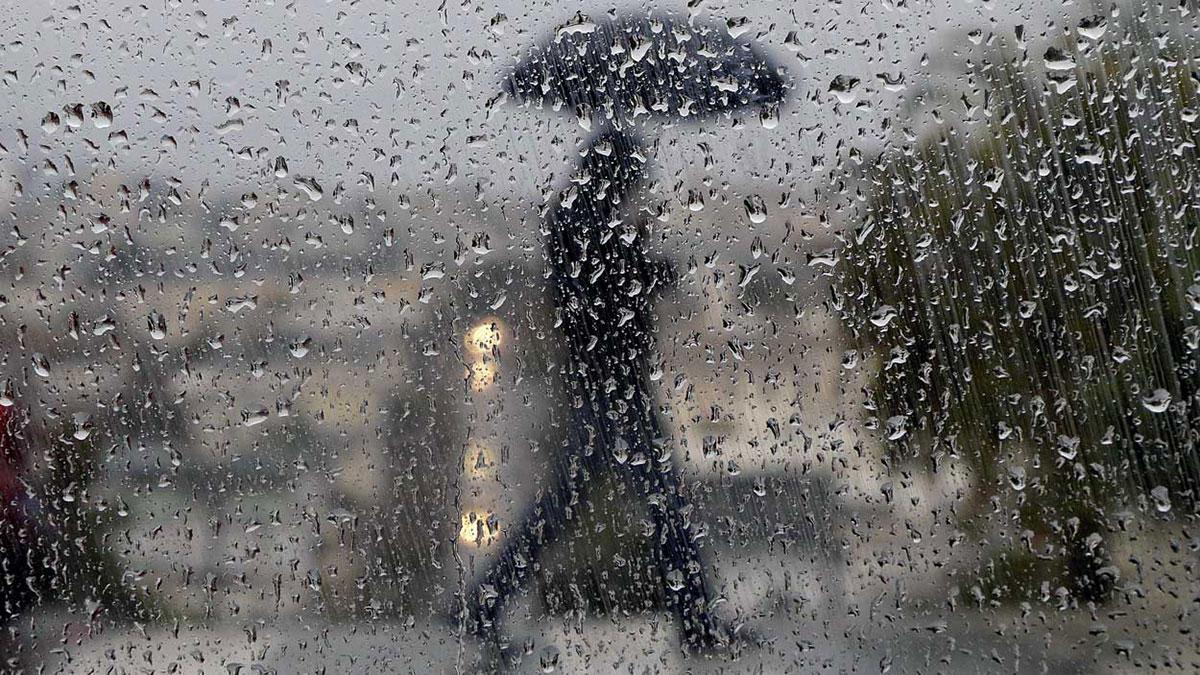 گونهی خیس باران