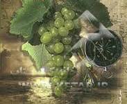 «اقیانوسی از انگور» اثر جویا معروفی